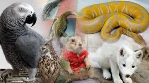 สัตว์เลี้ยงสุดแปลก