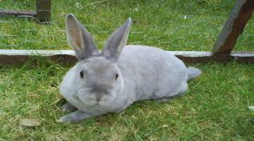 กระต่ายยอดนิยม