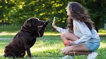 วิธีการฝึกสุนัข